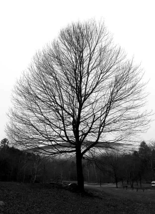 black-tree