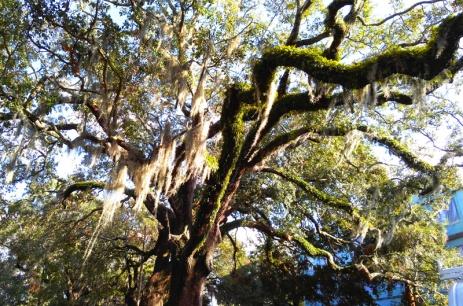 magic-tree