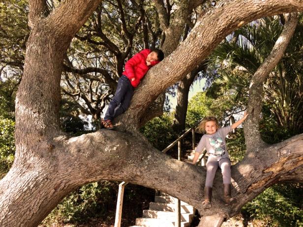 wissam-sanaa-tree